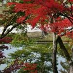 japan_momiji-gari_2012_2_61