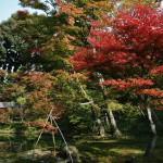japan_momiji-gari_2012_2_64