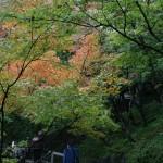 japan_momiji-gari_2012_35