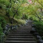 japan_momiji-gari_2012_39