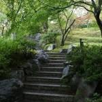 japan_momiji-gari_2012_40