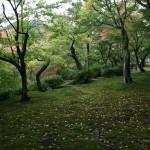 japan_momiji-gari_2012_44