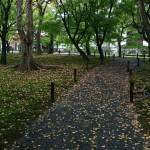 japan_momiji-gari_2012_45