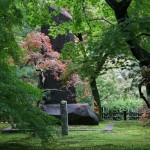 japan_momiji-gari_2012_51