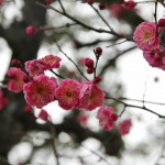 japan_baikasai_2013_70