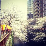 japan_early_sakura_blossom_03