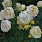 japan_flowers_26
