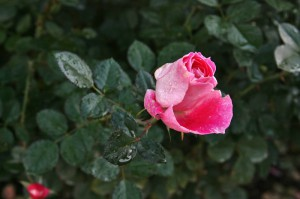 japan_flowers_28