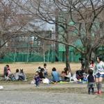 """Народу поханамиться вышло довольно много. Вот эти сидят как раз под """"классической"""" сакурой сорта """"сомэйёсино"""". Как видите, пока не цветет совсем. Что совершенно никому не мешает наслаждаться теплым деньком"""