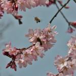 Живность всякая тоже наслаждается цветочками