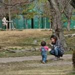 japan_hanami_2013_01_50