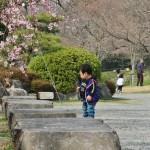 japan_hanami_2013_01_51