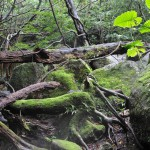 japan_princess_mononoke_forest_01