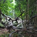 japan_princess_mononoke_forest_03