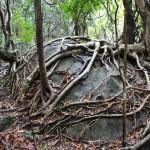 japan_princess_mononoke_forest_05