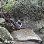 japan_princess_mononoke_forest_06