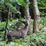 japan_princess_mononoke_forest_07