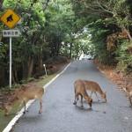 japan_princess_mononoke_forest_13