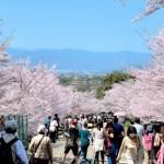 japan_sakura_at_kyoto_incline_01