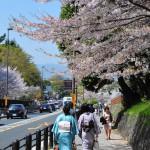 japan_sakura_at_kyoto_incline_04