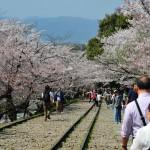 japan_sakura_at_kyoto_incline_12