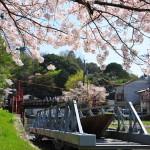 japan_sakura_at_kyoto_incline_14