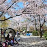japan_sakura_at_kyoto_incline_16
