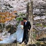 japan_sakura_at_kyoto_incline_17