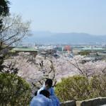 japan_sakura_at_kyoto_incline_19