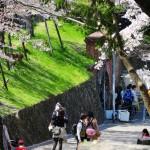 japan_sakura_at_kyoto_incline_20