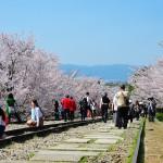 japan_sakura_at_kyoto_incline_24