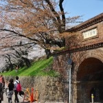 japan_sakura_at_kyoto_incline_29
