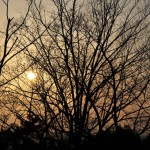 Озарённые заходящим солнцем деревья