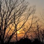 Солнце просвечивает сквозь деревья