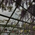 Слева за решетками видны поля аэрации. Запах цветущих глициний борется с запахом сами-понимаете-чего
