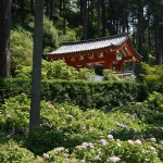 """Вон те ворота в лесу - парадный вход в храм Мимуродо-дзи 三室戸寺 в городе Удзи префектуры Киото. Мы тут бываем регулярно, цветочками любоваться. У этого храма даже есть неофициальное название """"Хана-дэра"""" за храмовый парк"""