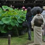 """Наливание и распивание происходят в """"лотосовом саду"""". Это такой пятачок в центре храмовой площади, заставленный горшками с лотосами. Лотосы начали цвести, потому зрелище очень вдохновляющее"""