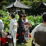 japan_sake_lotus_19