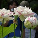 japan_sake_lotus_23