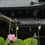 Сам храм основан в конце VIII века 49-м императором Конин-тэнно, хотя построек того времени не сохранилось. Основные здания были восстановлены последний раз в самом начале XIX века