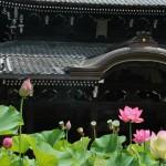 japan_sake_lotus_46