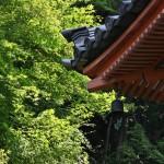 japan_sake_lotus_55