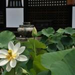 japan_sake_lotus_57