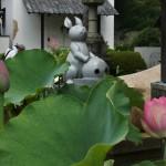 japan_sake_lotus_60