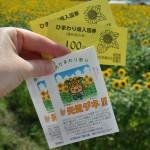 Билеты на поле и подарок от организаторов, прилагаемый к каждому билету: семена подсолнухов. Не знаю, что с ними делать, сажать вроде уже поздно, а употребить внутрь в качестве семечек почти нечего