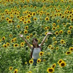 japan_sunflower_15