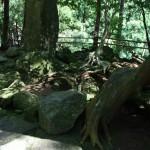 Камни с обеих сторон от дороги к божественному водопаду покрыты зеленым мхом. Там все равномерно покрыто этим мхом