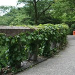 Оградка и мостик