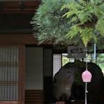 japan_wind_bell_43