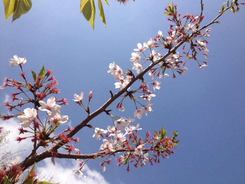 japanese_love_of_flowers_02